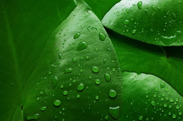 緑の濡れた葉の背景