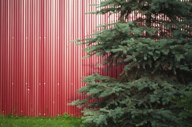 철 붉은 잎의 배경입니다. 간단한 펜싱의 예. 큰 침엽수 전나무와