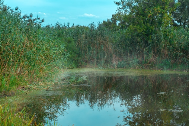 Фон озера с зеленью и туманом