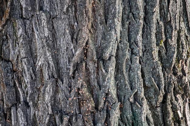 天然木の樹皮の背景