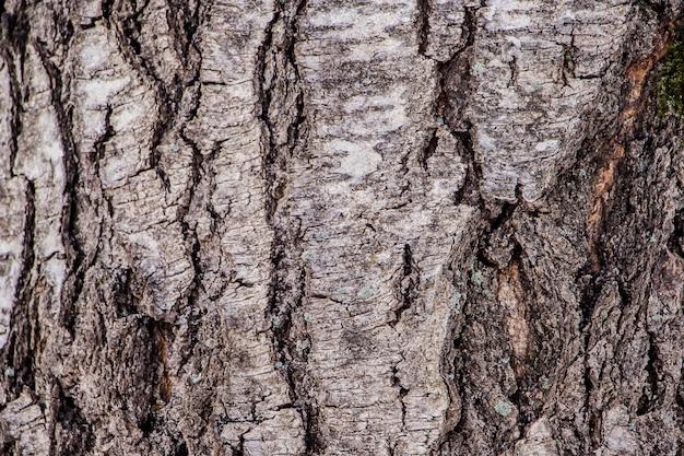 自然の木の樹皮の背景