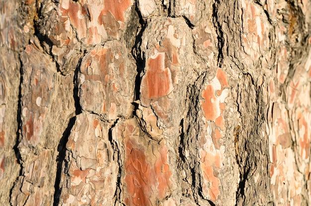 古い松の樹皮、木質のテクスチャの背景