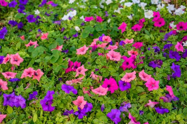 Фон из розовых и фиолетовых цветов и зеленых листьев выборочный фокус