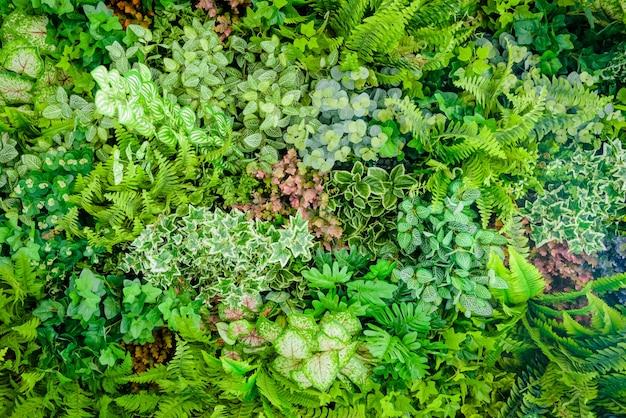 Фон пластиковых растений на стене, вертикальный сад