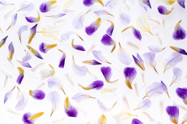 紫色のアイリスの花びらの背景。平面図、フラット横たわっていた。