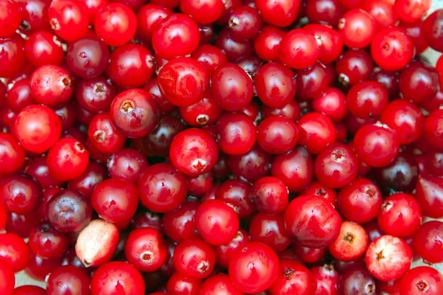 熟した赤いクランベリー、ベジタリアン料理、健康食品の背景