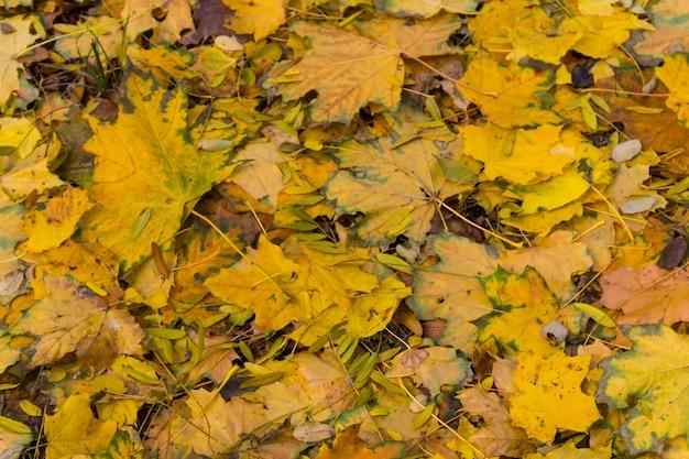 Фон из осенних разноцветных листьев