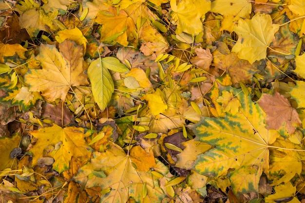 秋の色とりどりの葉の背景