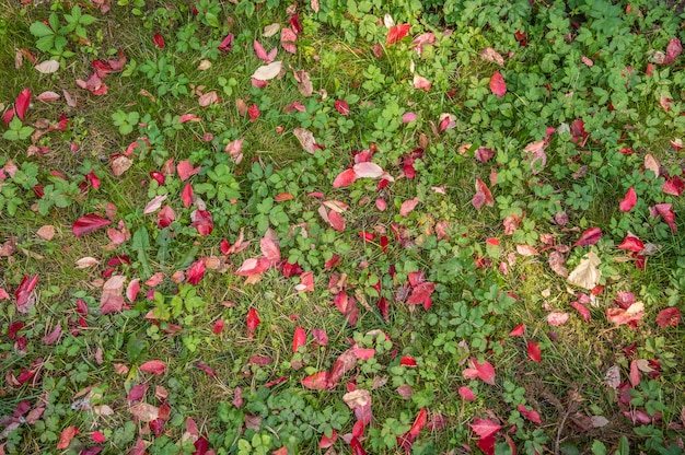 Фон поляны с зеленой травой и красными листьями на нем вид сверху