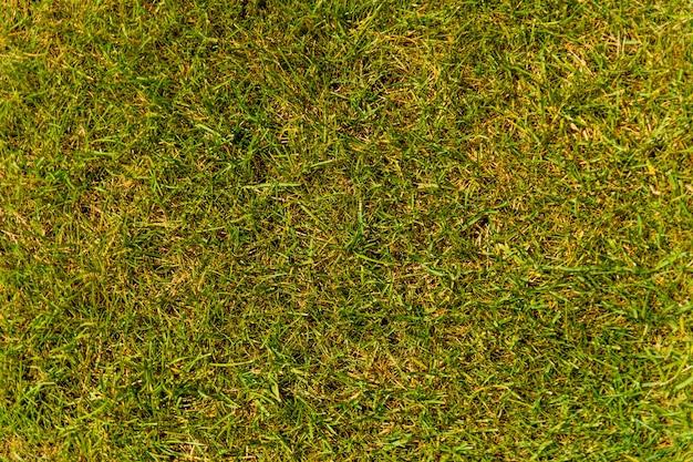 푸른 잔디의 배경입니다. 에코 컨셉