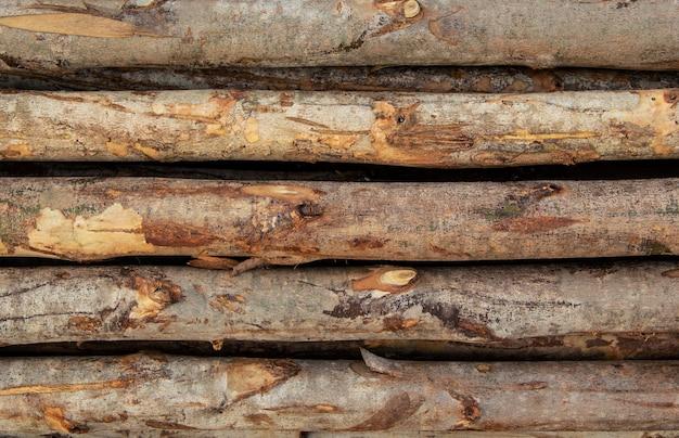 Фон ствол дерева эвкалипта, расположенных в слоях