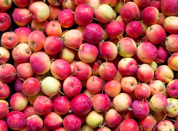 Предпосылка одичалых спелых красных яблок.