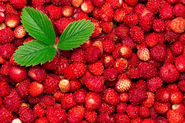 Фон из ягод лесной клубники с листом.
