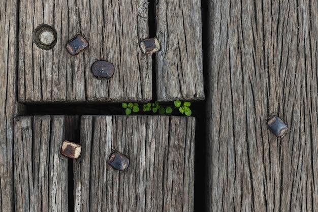 内部に生きている植物と木の板の背景