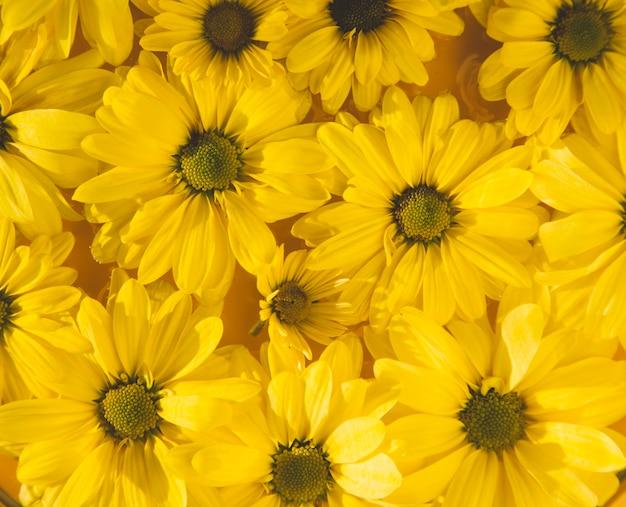 黄色い花の背景