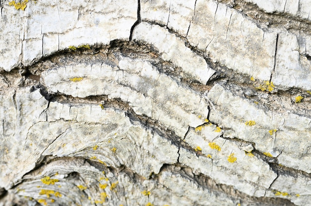 Background of old tree bark, woody texture