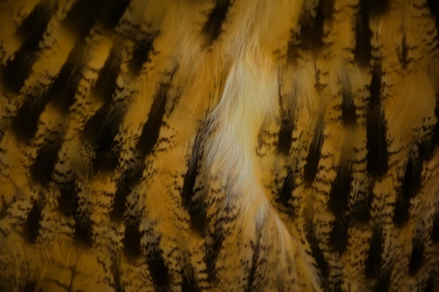 Background of owls feather.