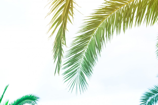 Background of palm leaves with sunlight for design, holiday travel design toned vintage pastel effect copy space