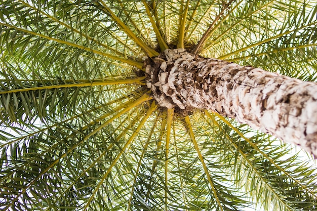 Background of palm tree