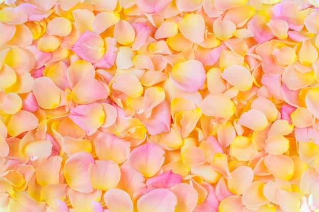 Background of pink rose petals close up
