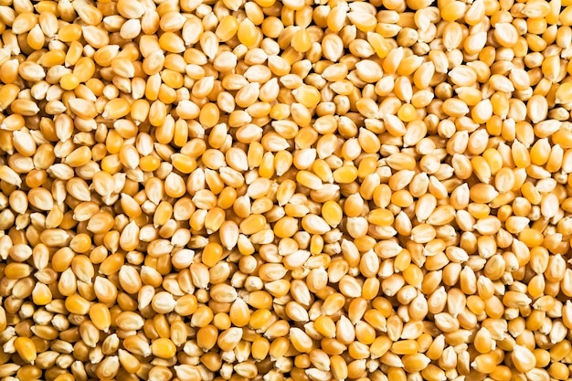 Background of raw corn grains to use as a poster in markets or magazines