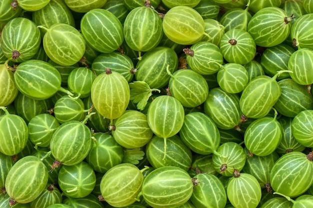 Background of ripe gooseberries, macro, healthy eating