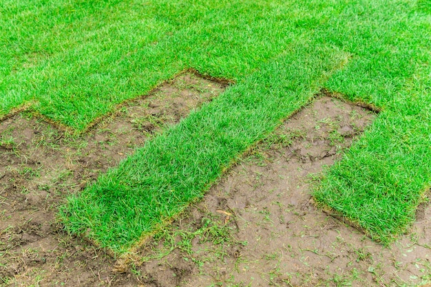 배경 - 땅에 놓는 과정에서 압연 잔디