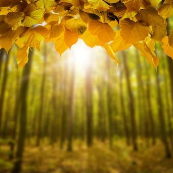背景の部屋のインテリア青いボケと日光と木の床と新鮮な春の緑の野草