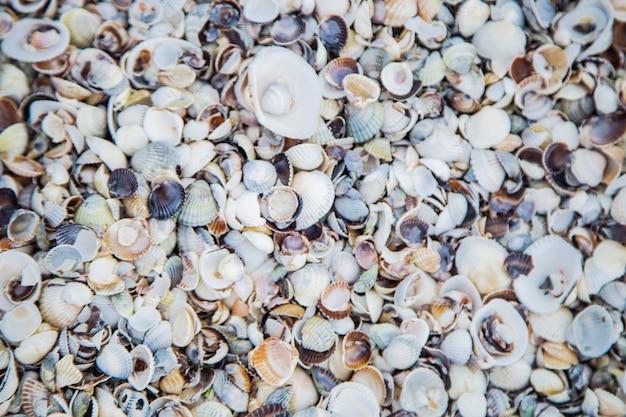 Фон песок, состоящий из малых и больших ракушек под солнечными лучами