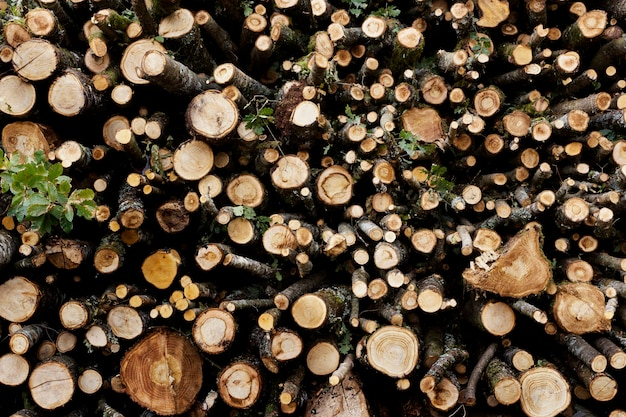 Background of a set of wooden trunks from many stacked trees
