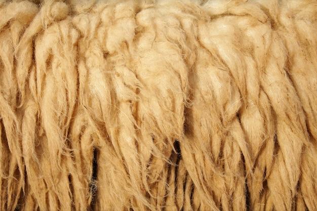 Background sheepskin