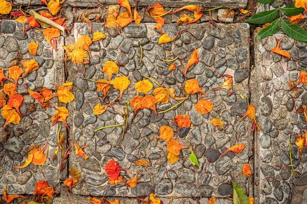 Фон камни цветы таиланд апельсин и браун