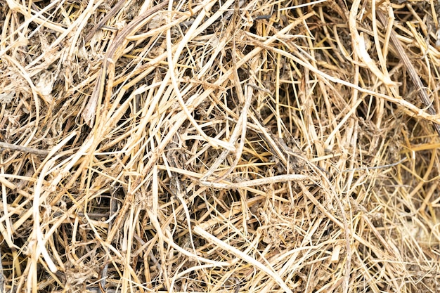 Background of straw dry grass thatch hay rice straw stack filled the field wheat background