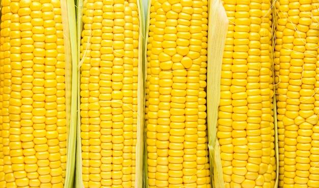 Background of sugar corn