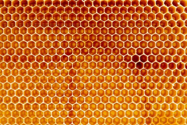 フルフレームビューで金色の蜂蜜で満たされた蜂の巣からワックスハニカムのセクションの背景のテクスチャとパターン