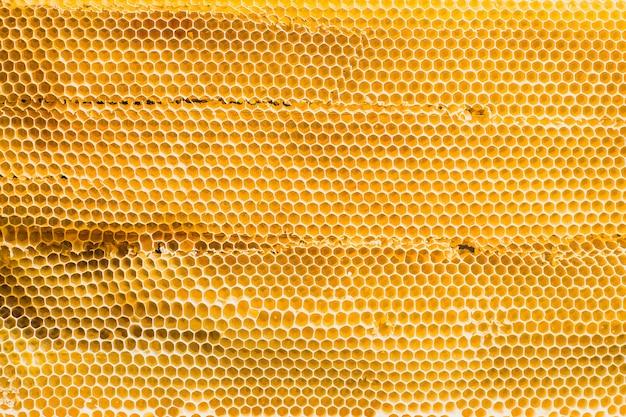 Фоновая текстура и рисунок сечения восковой соты из пчелиного улья, наполненного золотым медом, в полнокадровом виде