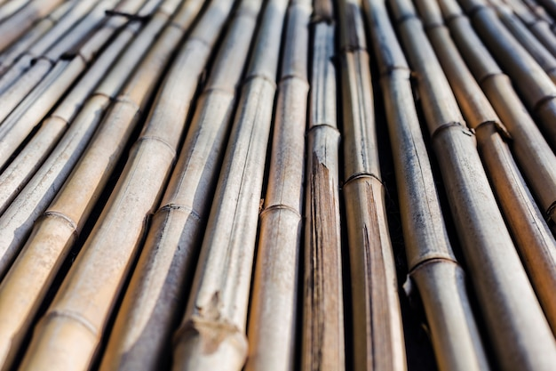 Background texture of bamboo stretching into the future
