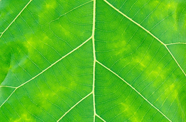 Background texture, full frame of green leaf texture.