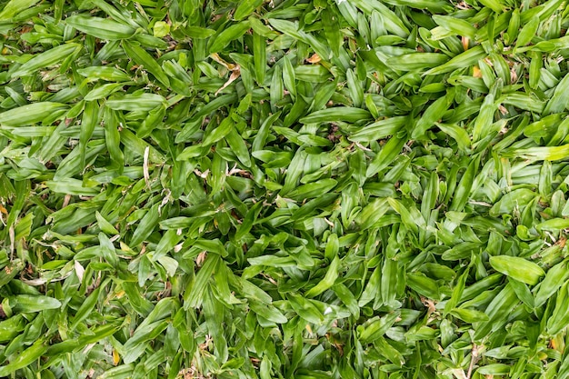 背景のテクスチャ、緑の草、上面図。