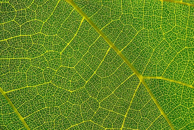 Background texture of green leaf macro photography of green leaf