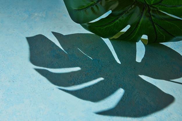 Фоновая текстура синего цвета с листьями монстеры и жесткой тенью от монстеры.