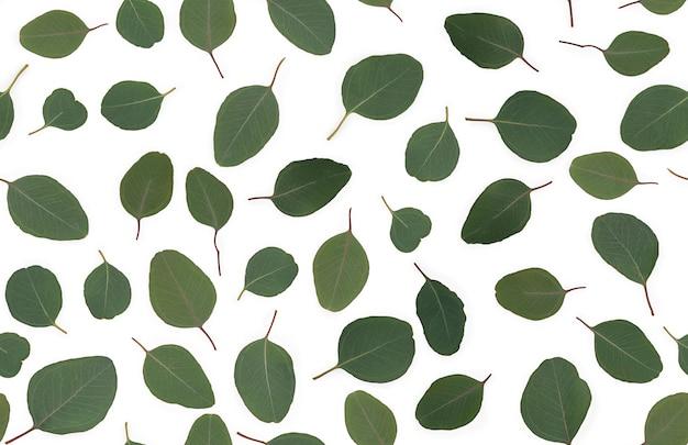 배경 질감 녹색 유칼립투스 잎, 이슬을했다. 평면 위치, 최고보기, 완벽 한 패턴입니다. 고품질 사진
