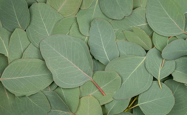 녹색 유칼립투스로 만든 배경 질감 빗방울, 이슬 잎