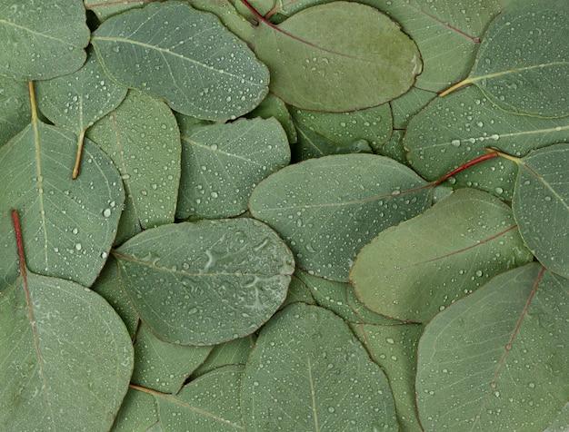 雨滴、露と緑のユーカリの葉で作られた背景テクスチャ
