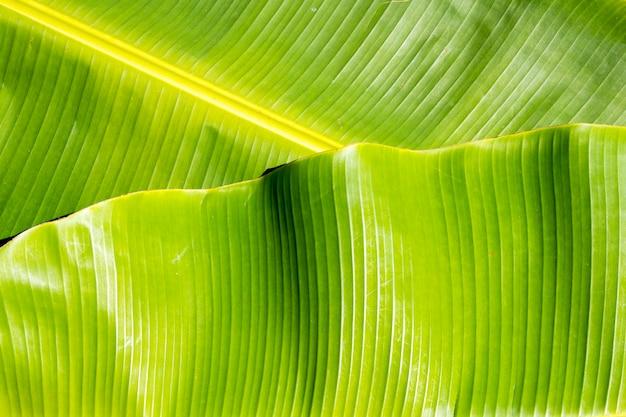 背景テクスチャ自然カラフルな明るいバナナの葉