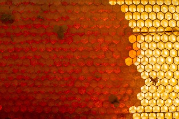 황금 꿀로 가득한 꿀벌 하이브에서 왁스 벌집 섹션의 배경 텍스처