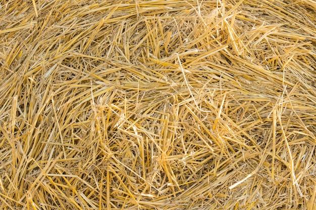 冬の間に動物または家畜の飼料のためにカットされた新鮮な乾燥干し草の金色の茎の背景テクスチャ