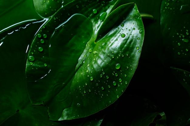 雨の後の水滴と緑の熱帯の葉の背景テクスチャ