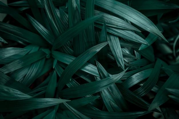 濃い緑色の自然の葉の背景テクスチャ。