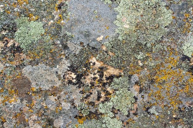 Фоновая текстура старого лишайника и мха на камнях. горизонтальное изображение.